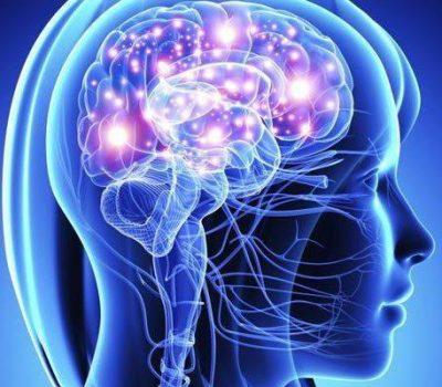 oharakterizuem-osobennosti-stroeniya-nervnoj-sistemi-pozvonochnih-prosto-i-ponyatno